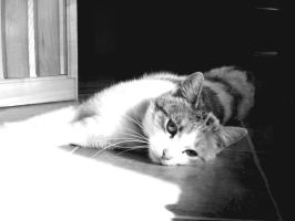 black and white cat by AgnieszkaK