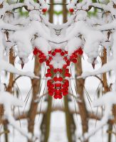 Snow Berries Manip by Tailgun2009