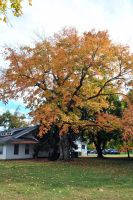 Tree in fall by xshadow259