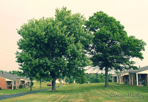 Trees by lynnd700