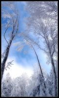 Winter Trees by LG77