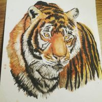 Tiger Watercolor Painting by Lynxcall
