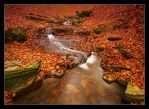 autumn brook by YoachimHUN