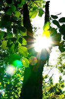 Sun Through the Leaves by DragonRider716