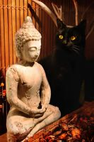 Budha Cat by 11st