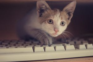 Keyboard kitty by OreGaOmaeOMamoru