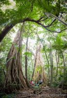 Forest Giants of Mt Tamborine Qld - 1 by Colin-LOCP