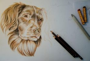 Dog portraits WIP by Kattvalk