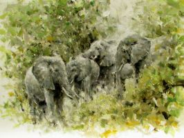 elephants by alrasyid
