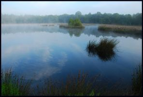 Morning at the forest lake by jchanders