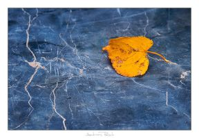 Autumn Leaf - 02 by AndreasResch