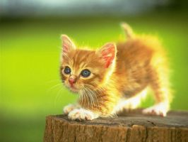 Cute kitten by ReconReno