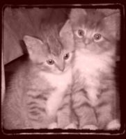 Kittens-Hansel and Katzi by 1Bluefur