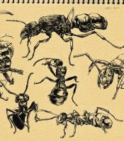 Ant sketching by inubiko