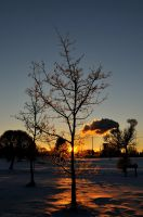 Frozen tree by Caarajack