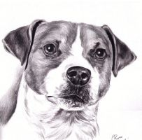Jack Russell Terrier by isisandwolf