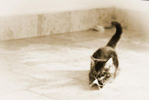 Black and white kitty by hasanaljanaby