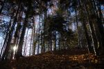 Fall landscape - Forrest by whisper-my-name17