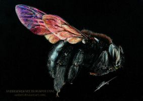 Carpenter Bee by AmBr0