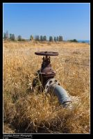 Grass Valve by Punt1971