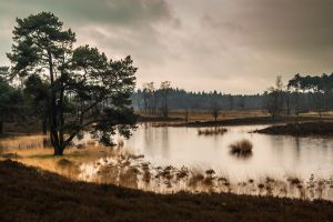 .: Wetland Haven :. by syntheticdreamer