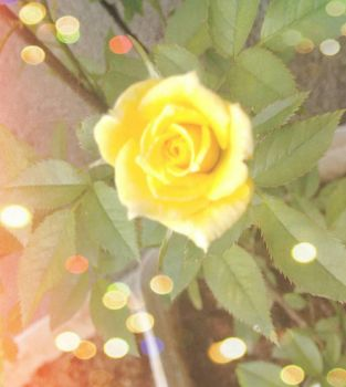 The Yellow Flower by Mely14Arts