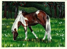 Johnny Appleseed ACEO by Fire-n-ash