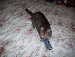 Beau cat with Remote by Bioshutt