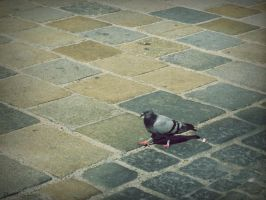 Bird at the street by 97lessi