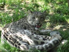 ZOO - 2 by Unknown-Variable