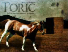 Toric by LaurenAnisa