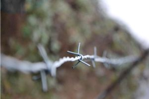 Barbed by skipabeatphotography