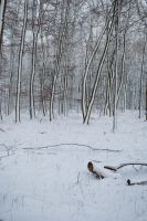 Snowscape Stock 59 by Sed-rah-Stock