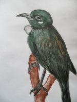 Tui (watercolour) by Schlunfs