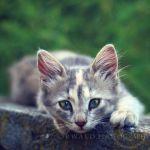 when I look into your eyes by Orwald