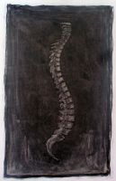 Spine study by Fagertveit