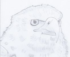 Eagle drawing 1 by NINJAWERETIGER