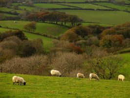 Pastoral Exmoor by parallel-pam