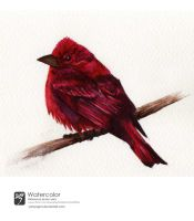 Watercolor Bird II by YohProject