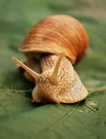 hello mr. snail by quapouchy