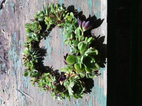 Succulent wreath by galled