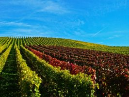 Sunny Vineyards I by Life-For-Sale