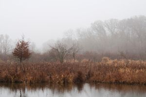 Indiana Mists by jaxon-riddle