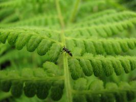 Yellow Striped Ant by weirdness-is-cul
