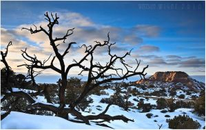 Canyonlands in Winter by tourofnature