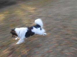 Running is joy by Colliequest