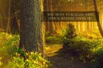 The Forest Whispers Golden Stock by TEMPERATE-SAGE