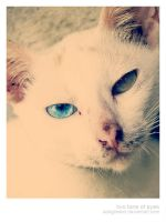 two tone of eyes by adegreden