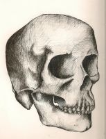 Observational drawing of Skull by Mr-P-P-Hed