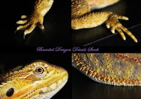 Bearded Dragon Details by DigitalissSTOCK